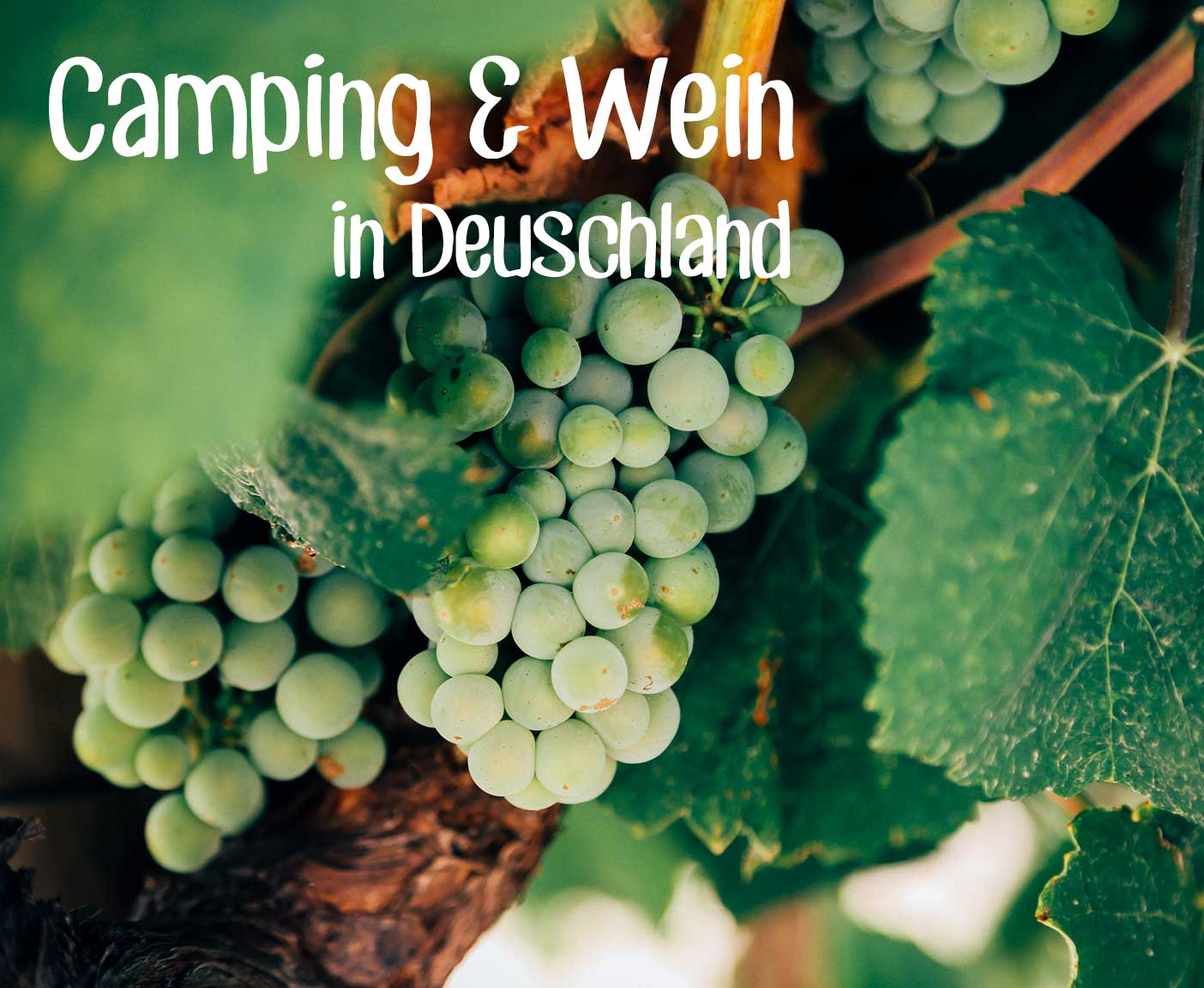 Weingut Weinrebe gruen Camping und Wein in Deutschland Paulcamper